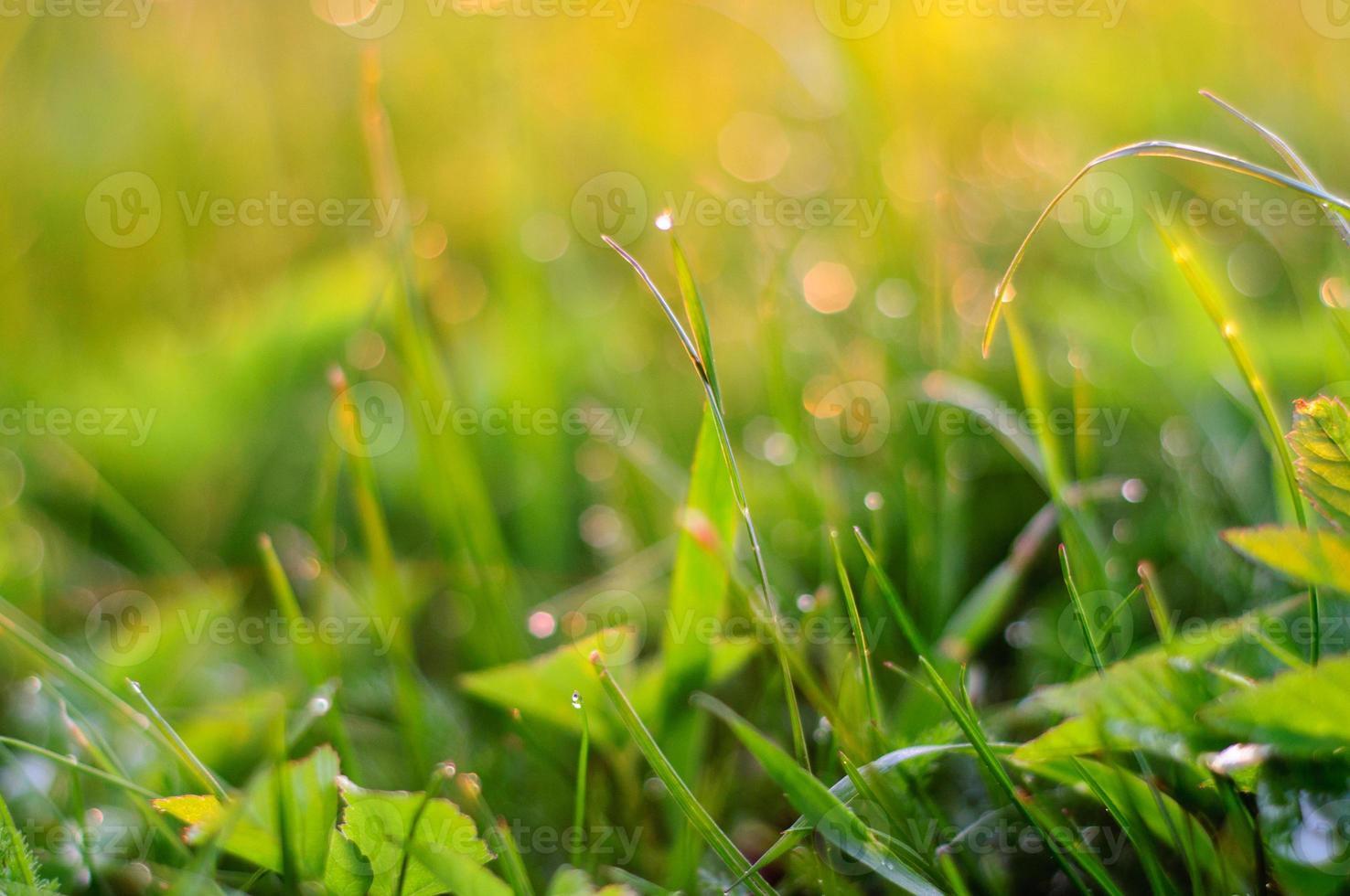 fond de nature avec de l'herbe au coucher du soleil photo