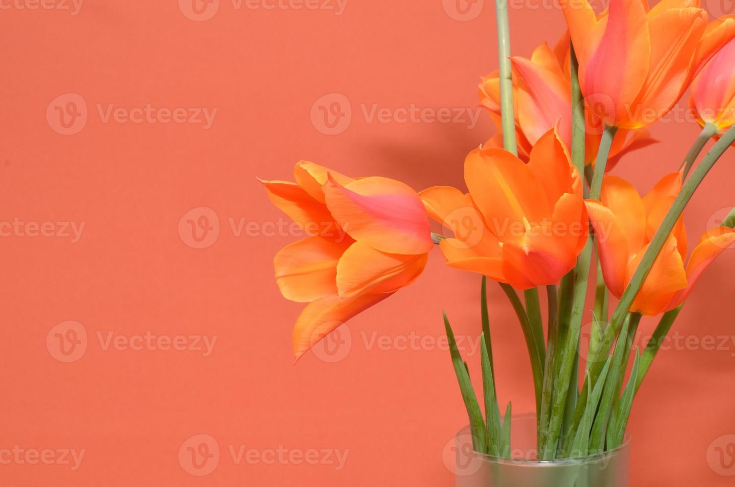 tulipes orange photo