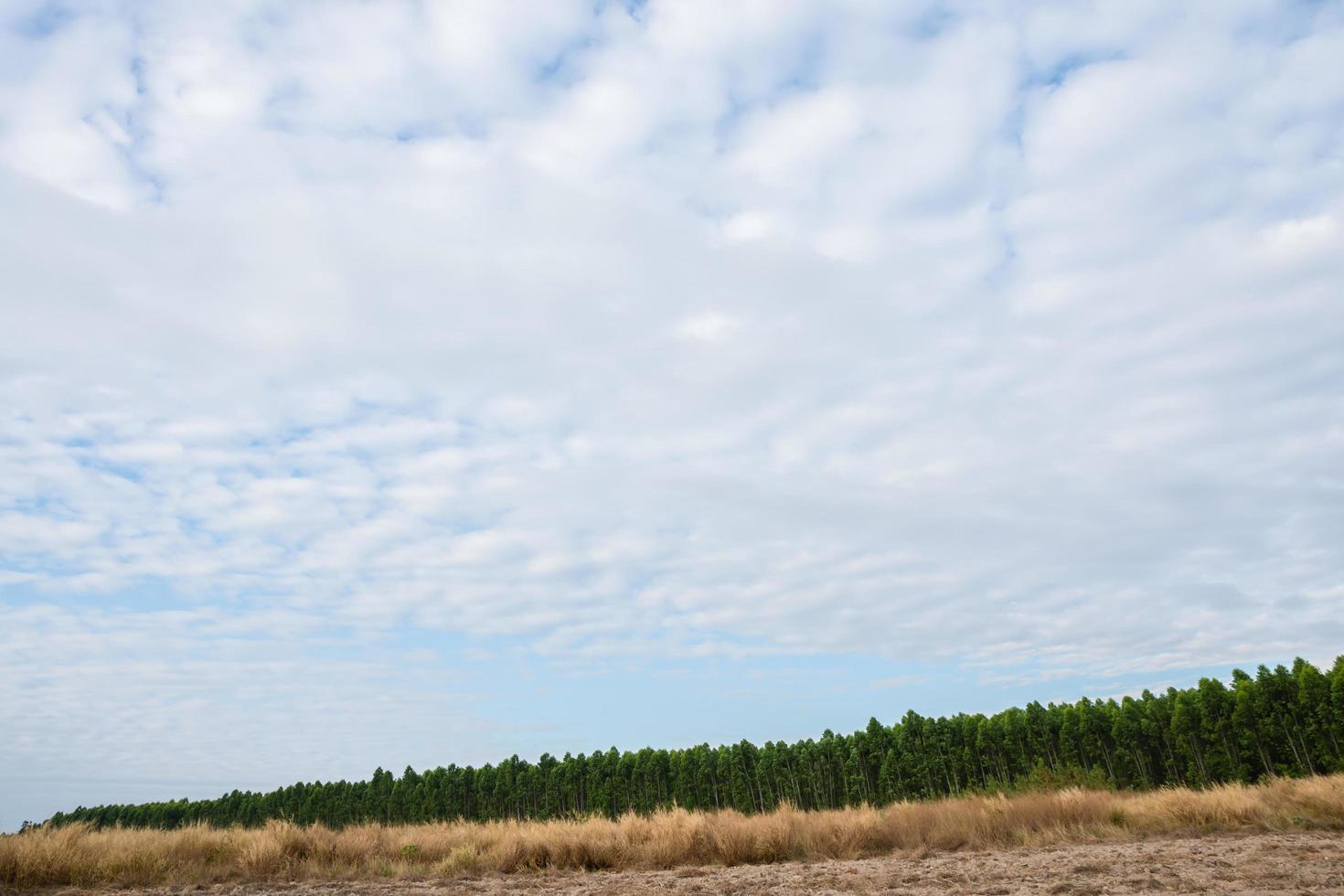 paysage rural avec des arbres photo