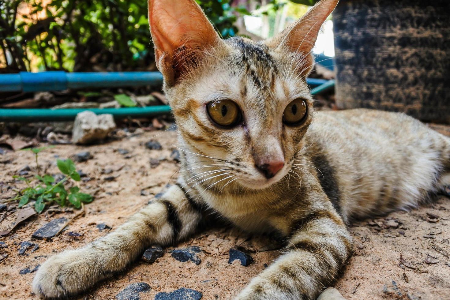 jeune chat errant photo