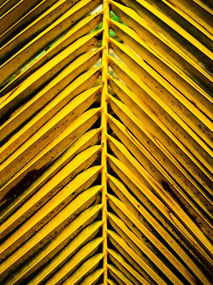 feuilles de noix de coco brillantes naturelles photo