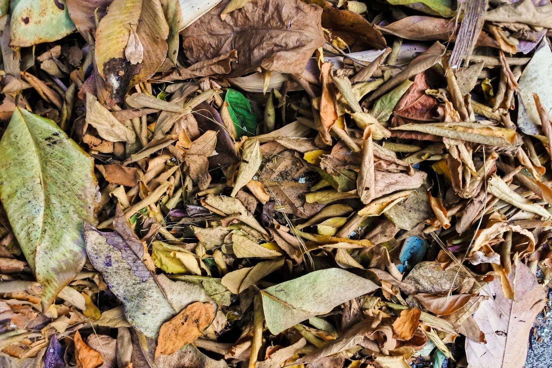 fond de feuilles brunes sèches photo