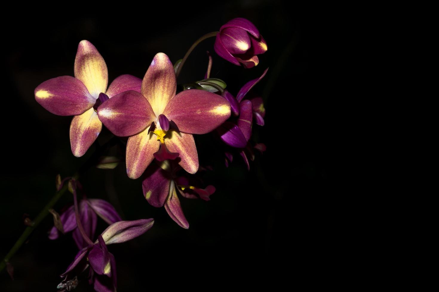 fleurs d'orchidées violettes photo