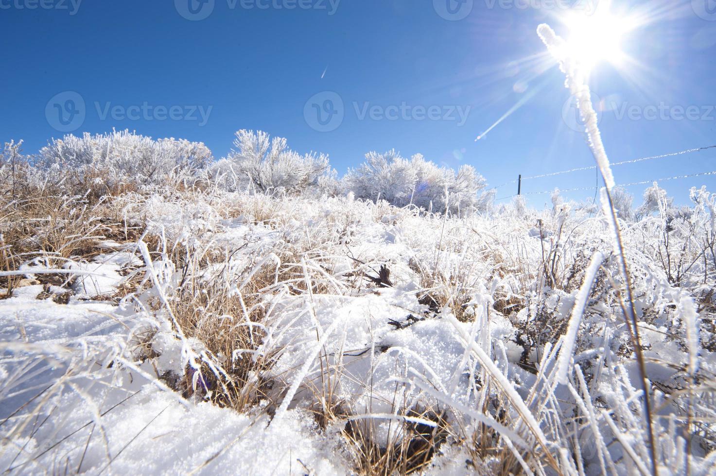 arbres de neige et herbe photo