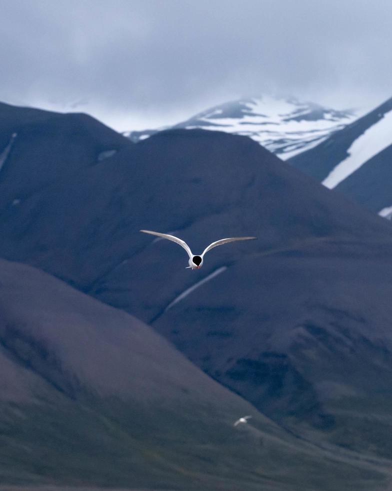 oiseau en vol au dessus des montagnes photo