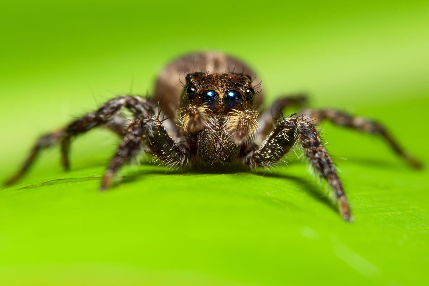 araignée macro sur une feuille verte photo
