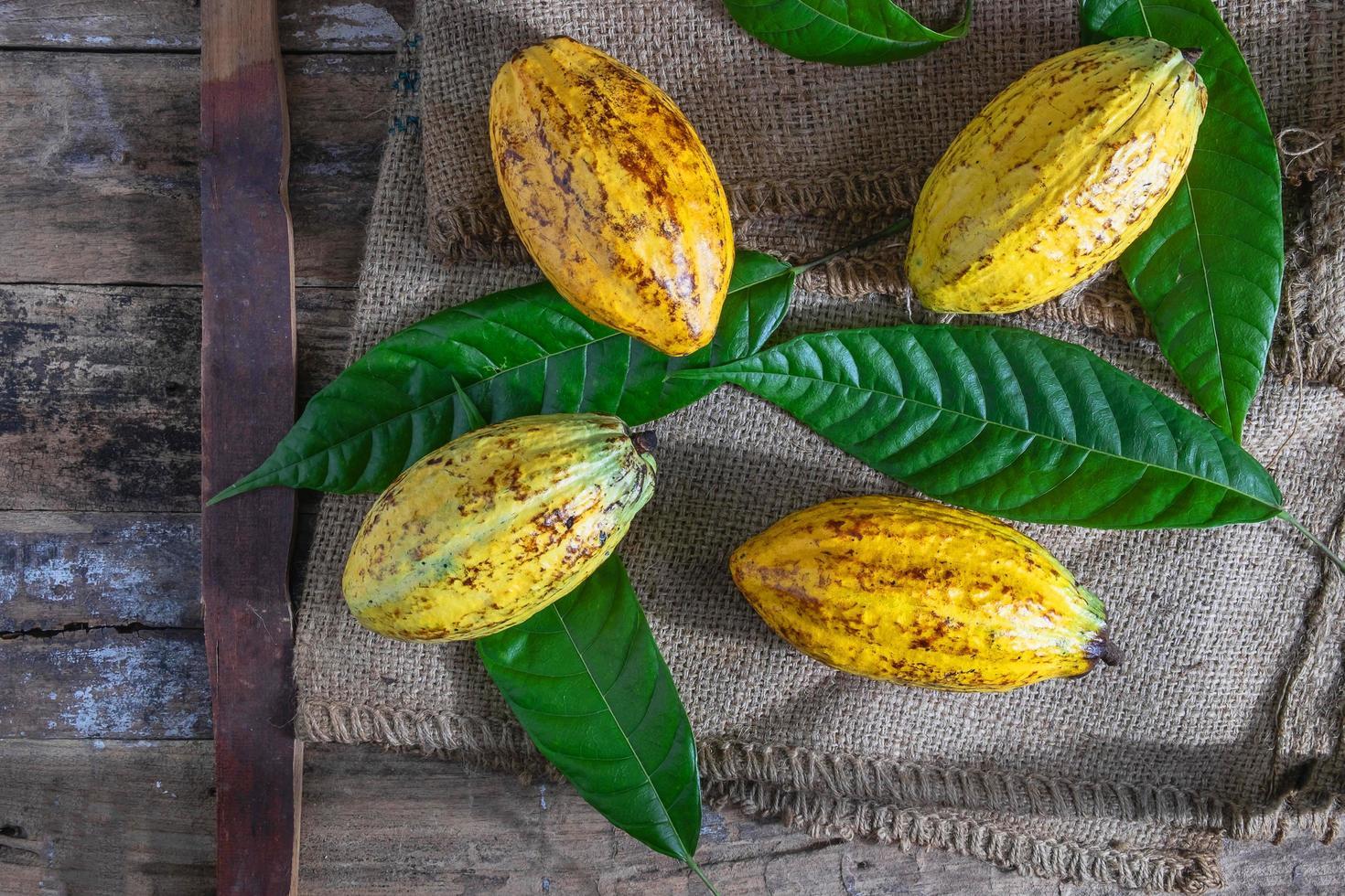 Fruits de cacao entiers sur sac brun photo