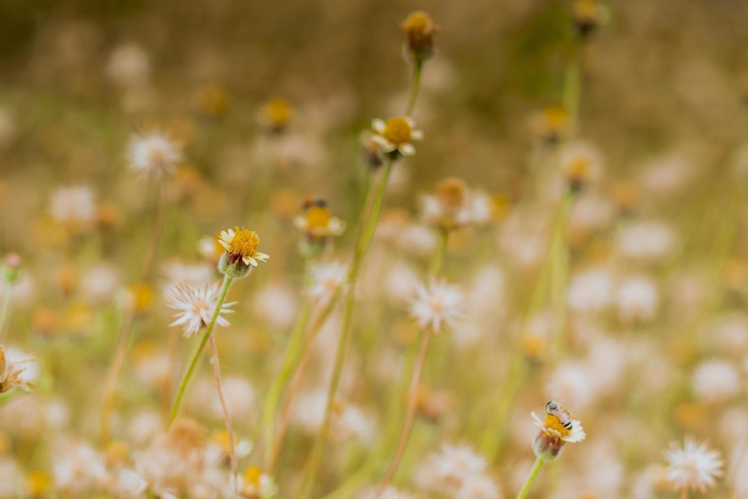résumé, herbe sauvage, fleurs photo