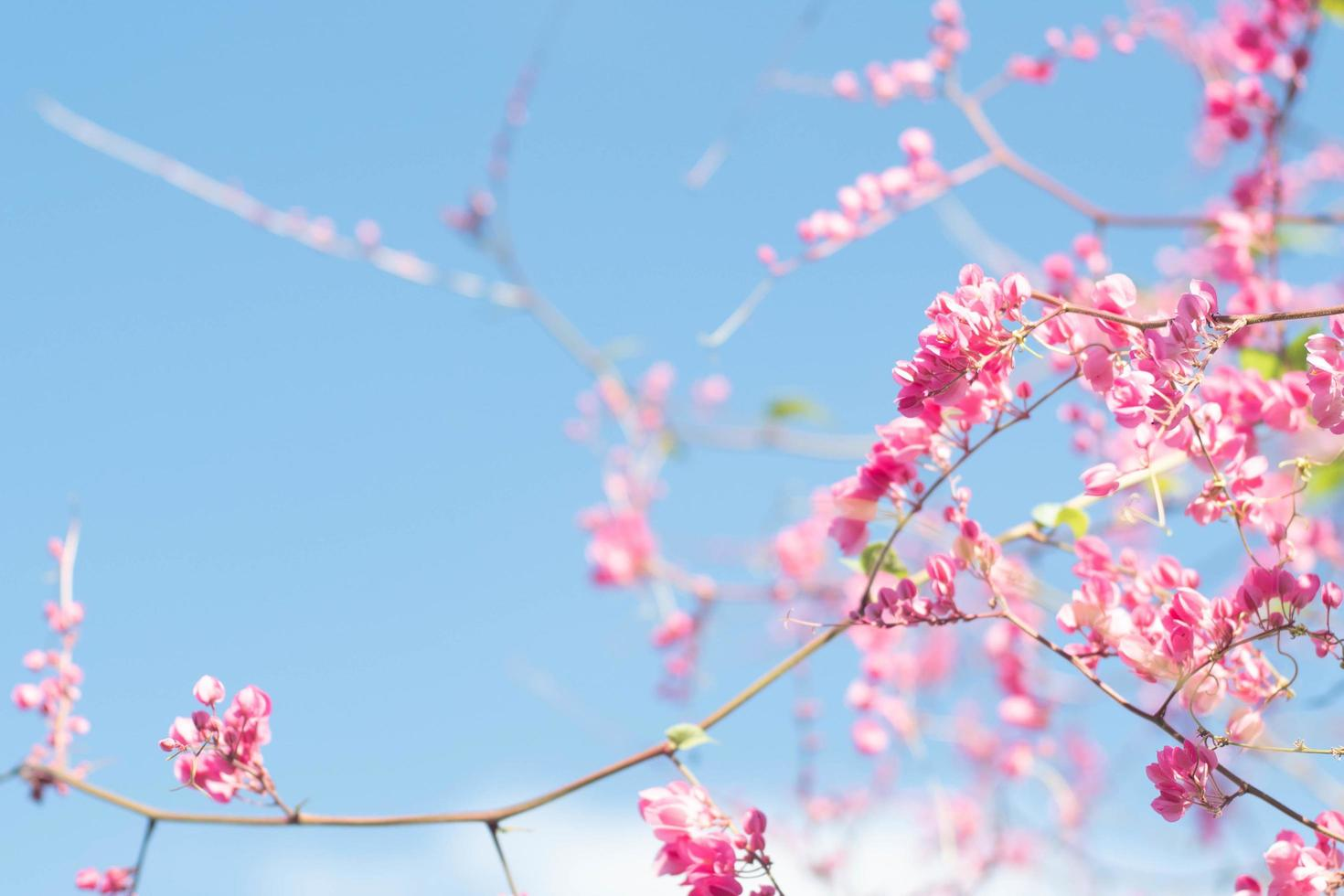 bel arbre de fleurs de cerisier lumineux photo