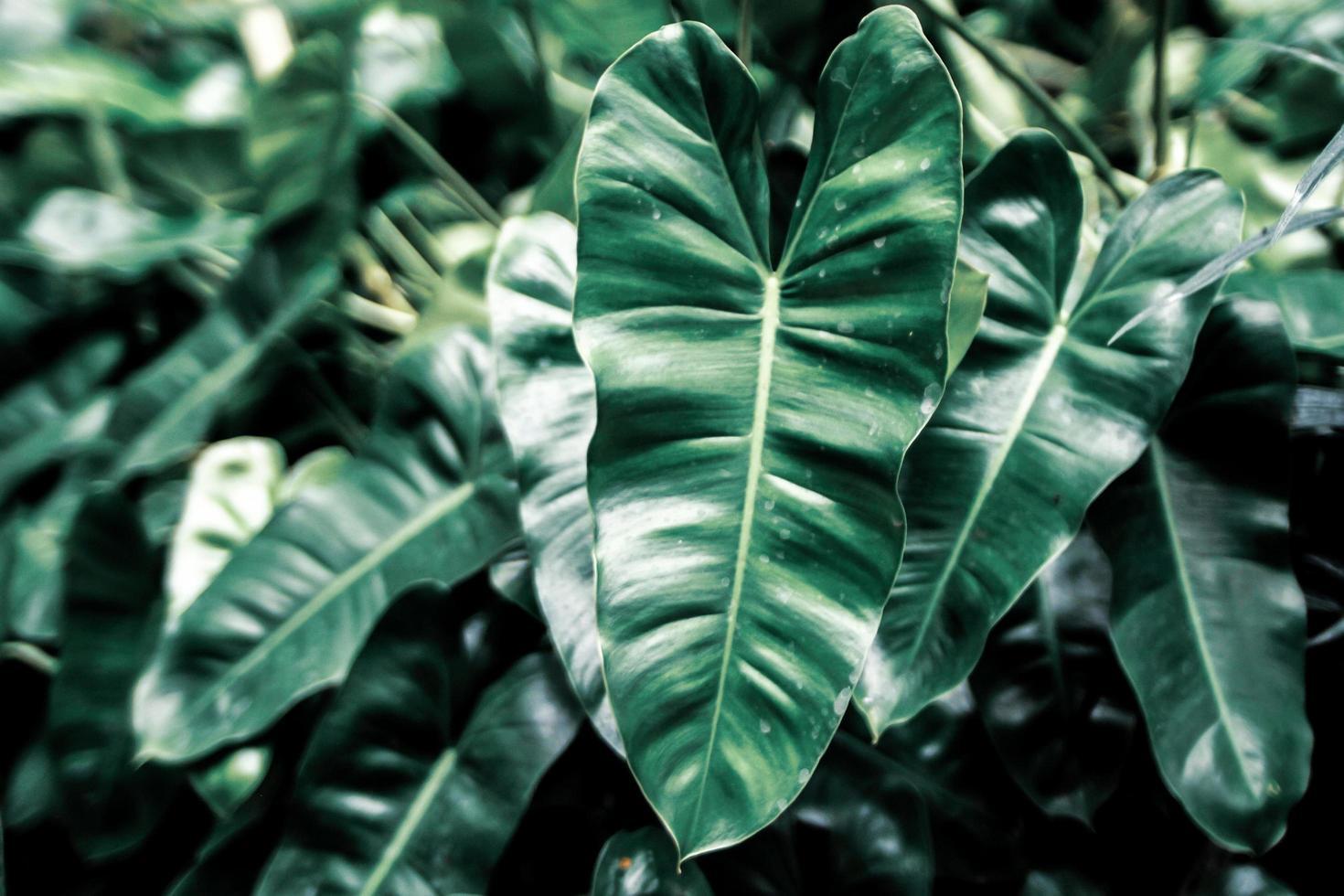 fond de feuilles vert foncé photo