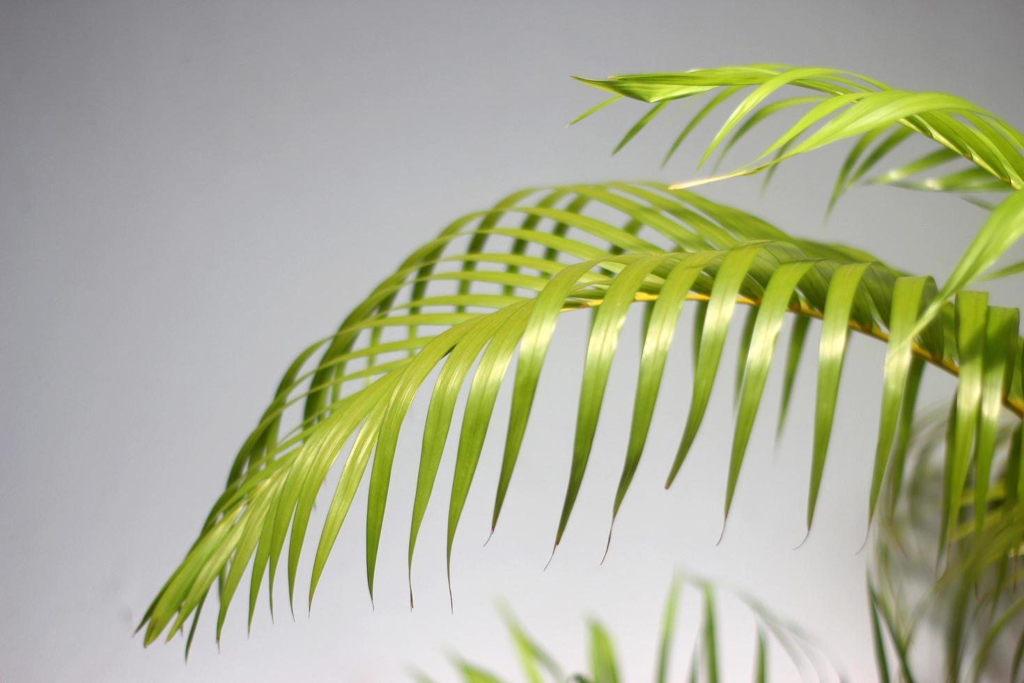ombres et feuilles de palmier vert photo
