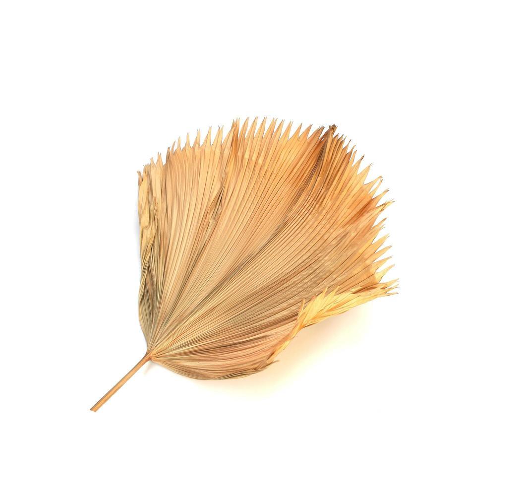 Feuille de palmier fan Fidji sec isolé sur fond blanc photo
