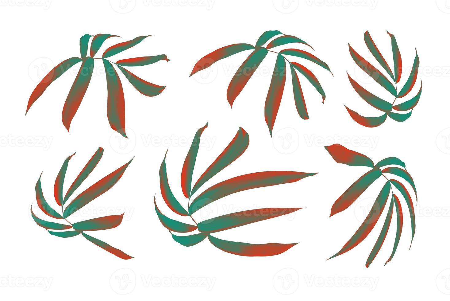 feuilles isolées sur fond blanc photo