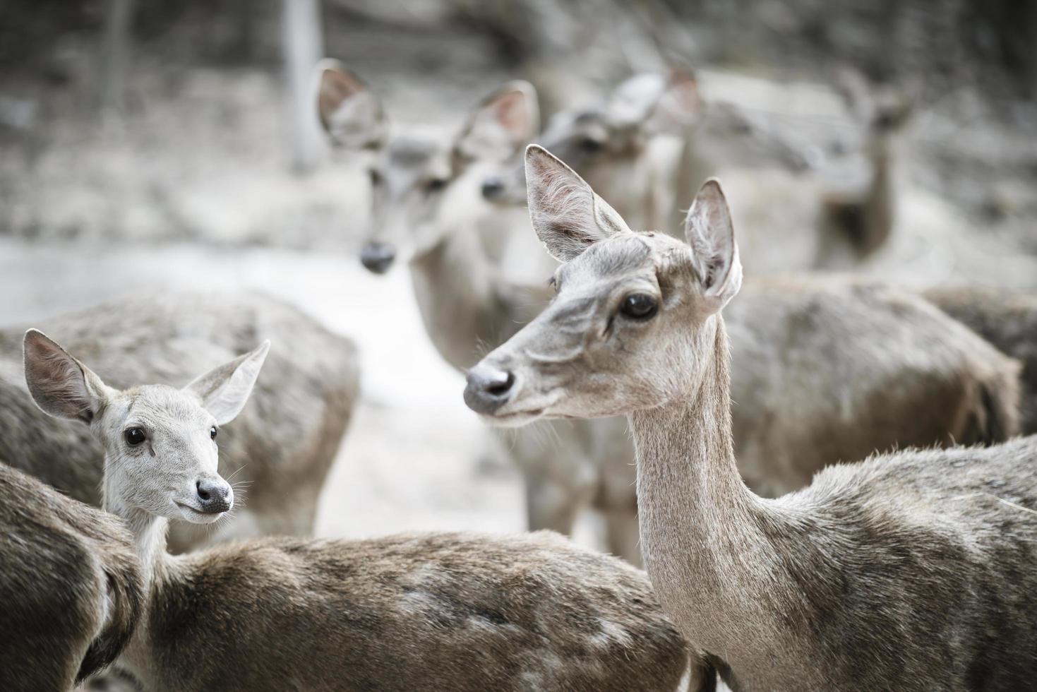 gros plan du troupeau de cerfs. concept d'animaux. photo