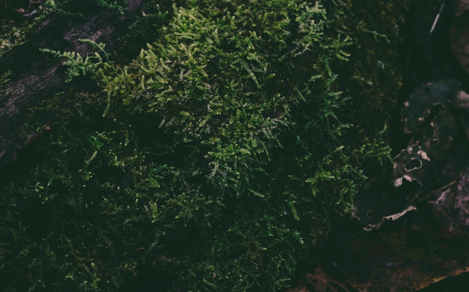 buisson vert dans la forêt photo