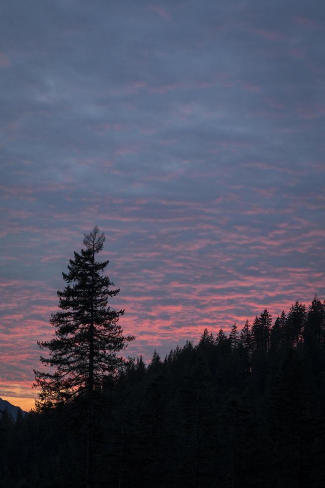 silhouette d'une colline et d'un arbre au coucher du soleil photo