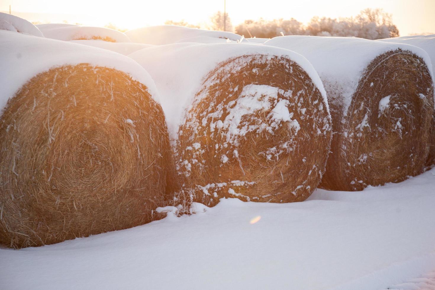 bails de foin au lever du soleil dans la neige photo