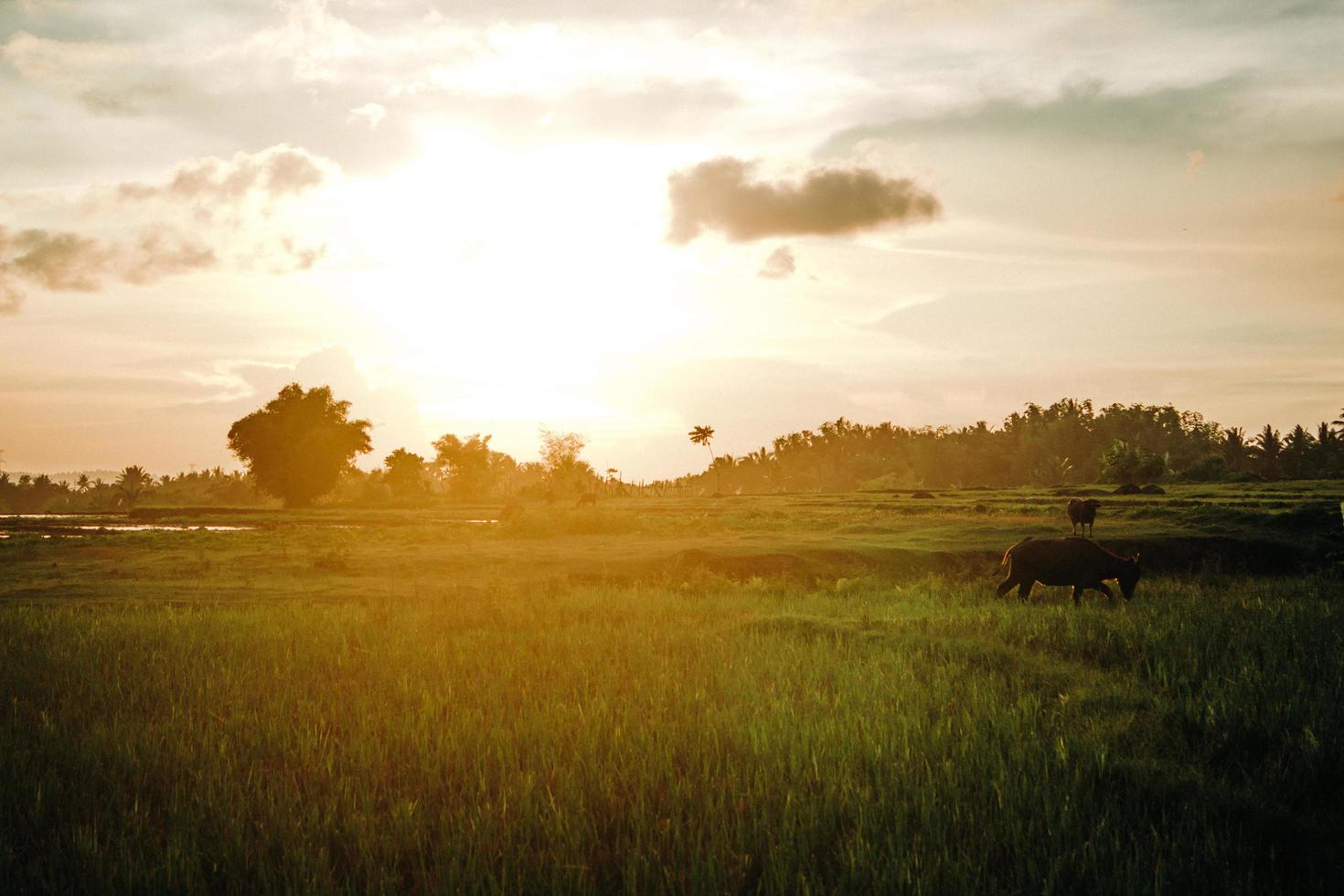 heure d'or sur un terrain en herbe photo