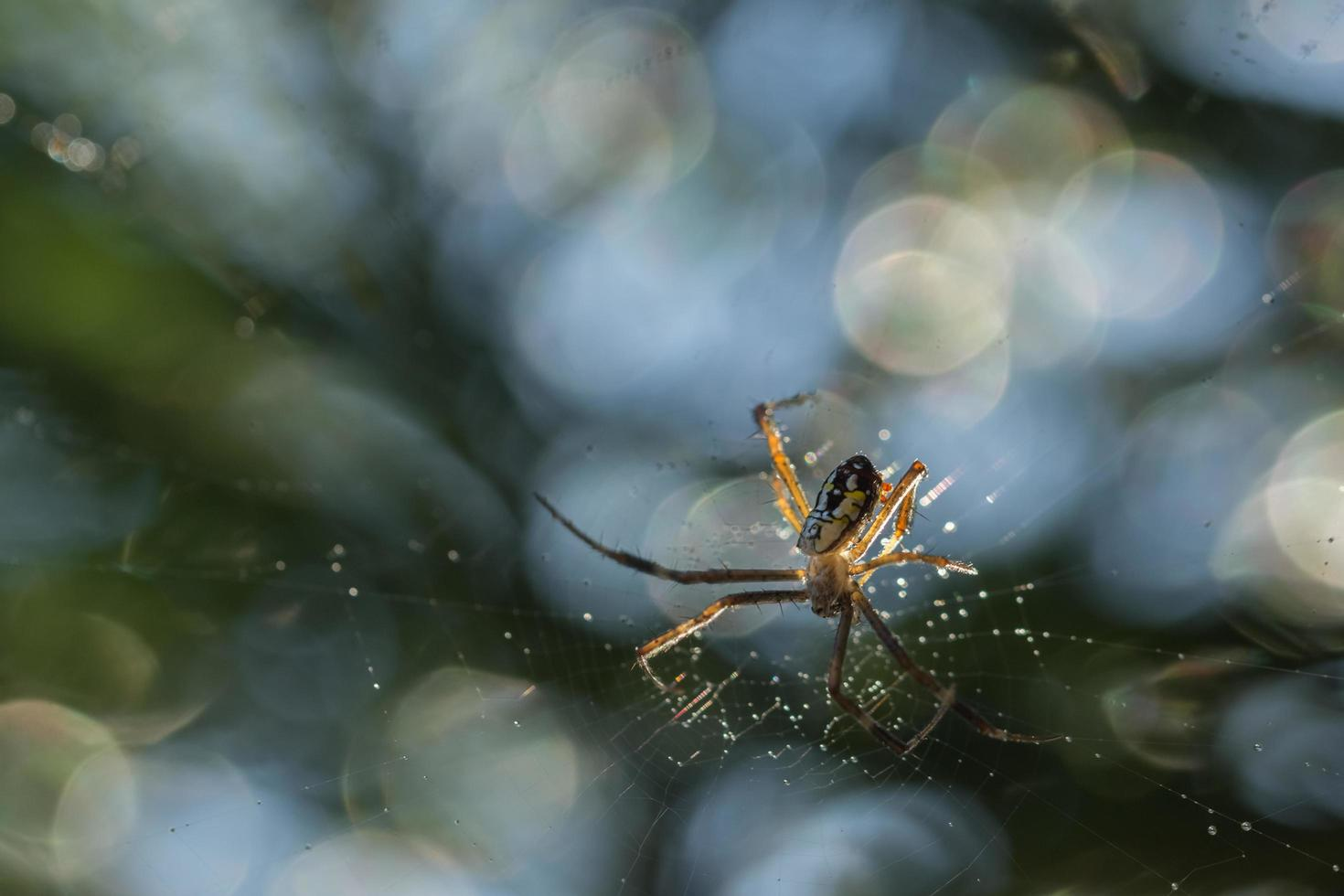 araignée dans la toile d'araignée photo