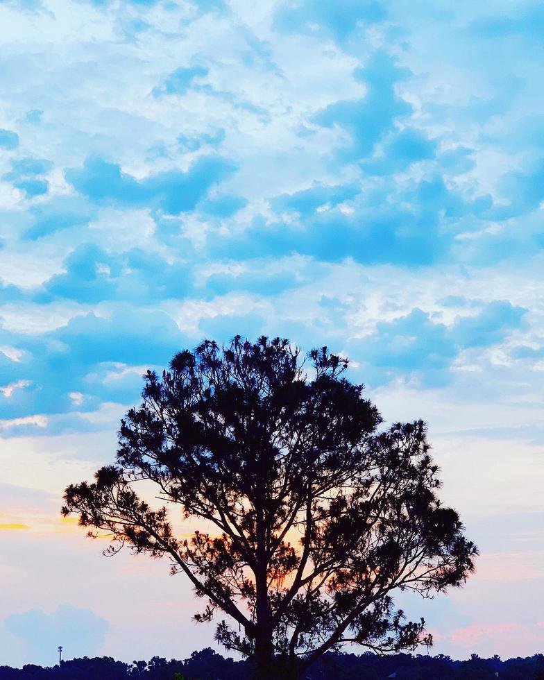 silhouette d'arbre pendant la journée photo