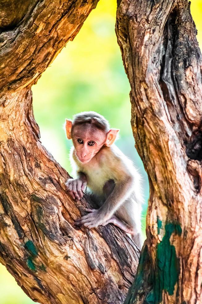 singe brun sur tronc brun photo