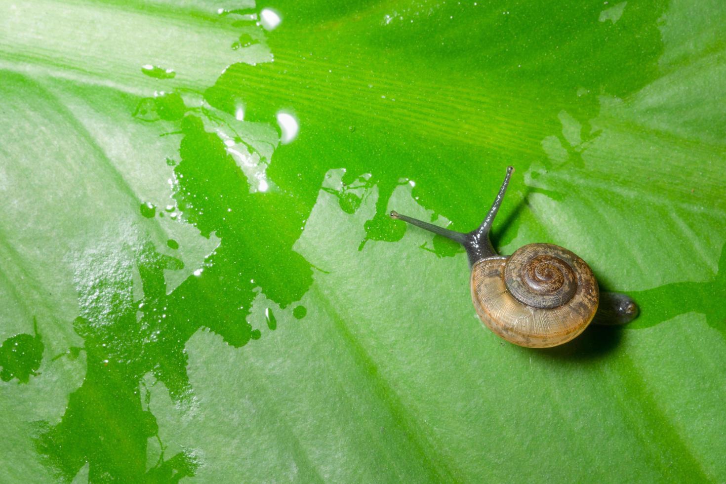 escargot sur une feuille photo