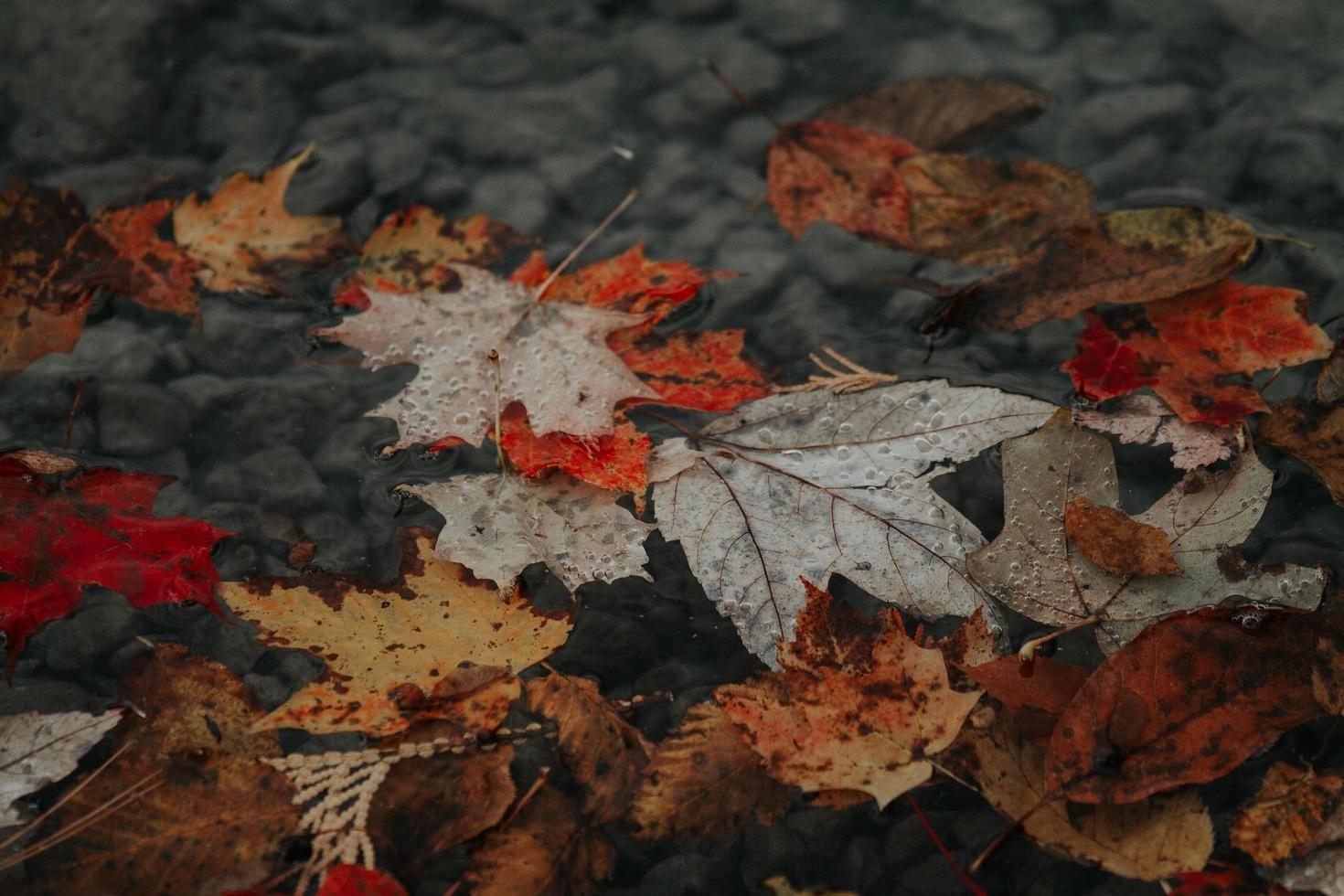 gros plan, de, feuilles automne, sur, terre photo