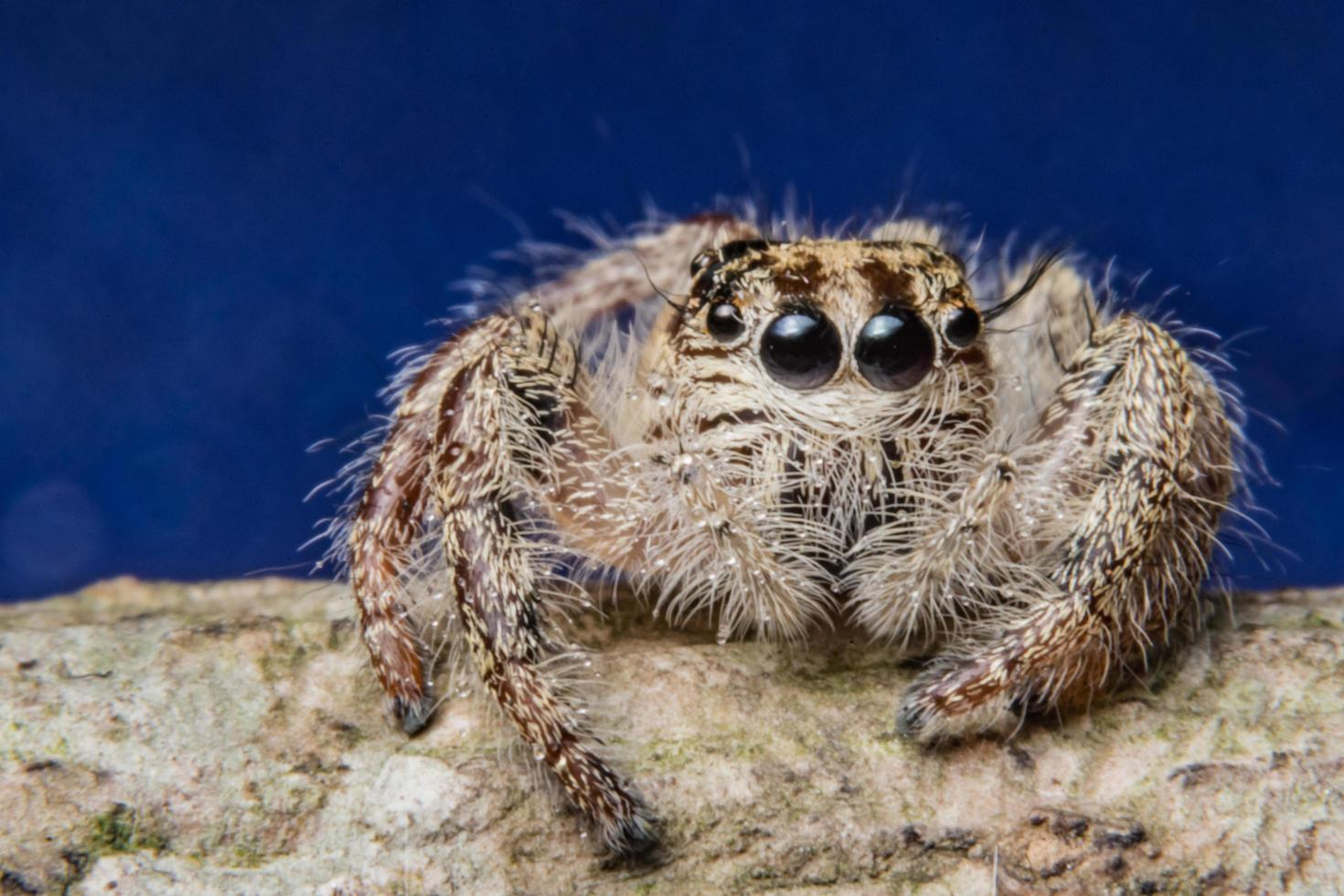 araignée sur une branche photo