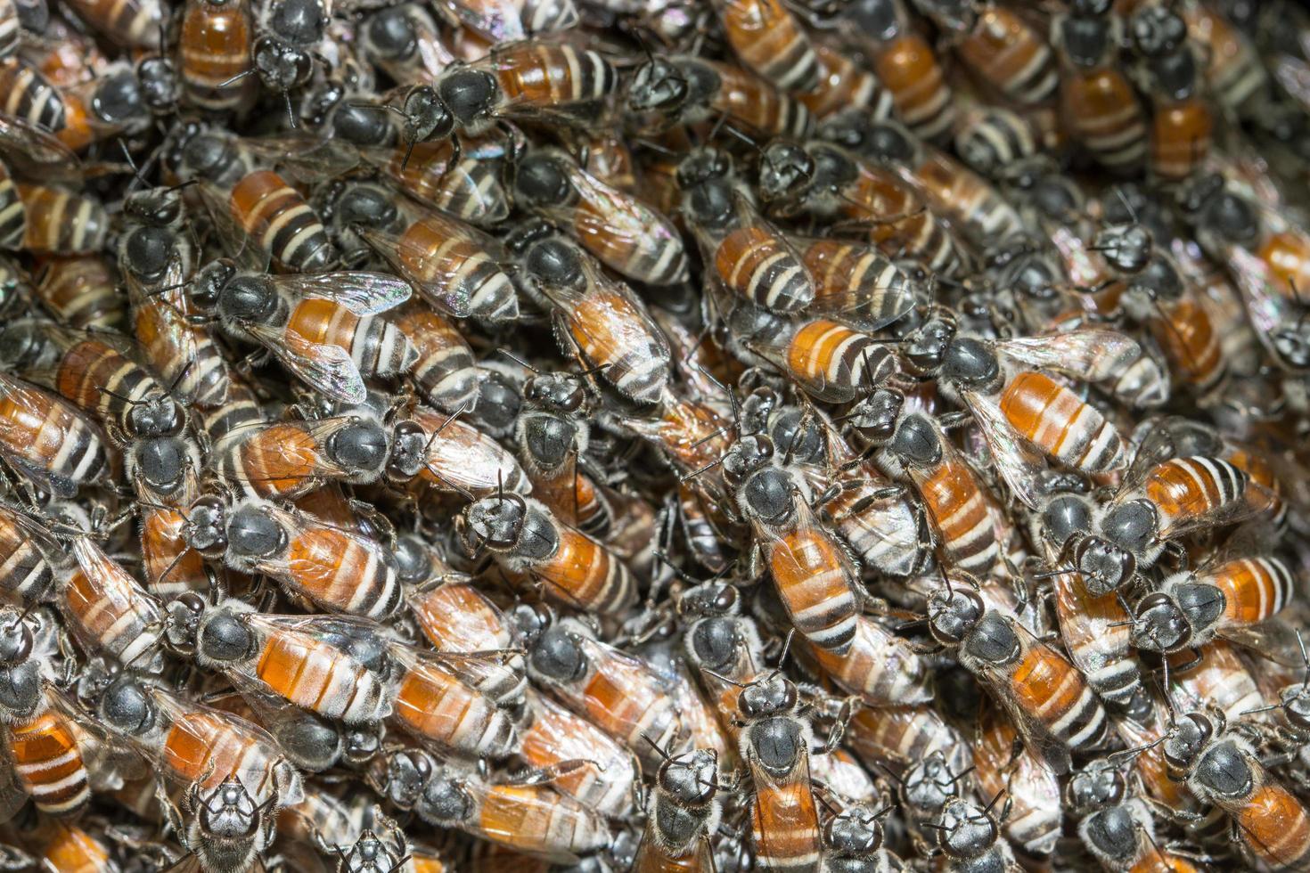 abeille, foule, gros plan photo