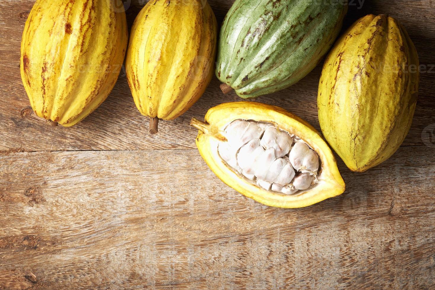 fruit de cacao photo