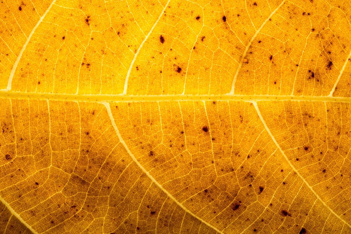 motif de feuilles sèches photo