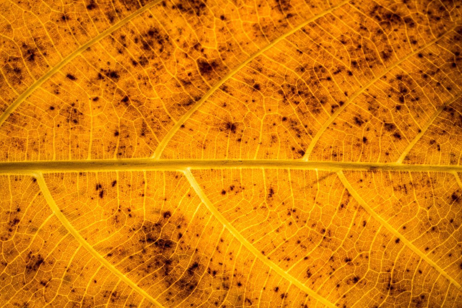 motif de feuilles marron photo