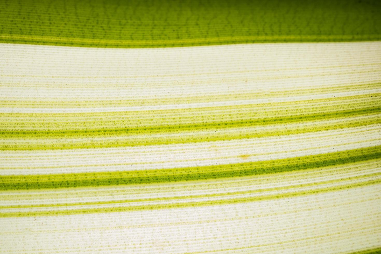 motif de feuilles vertes et blanches photo