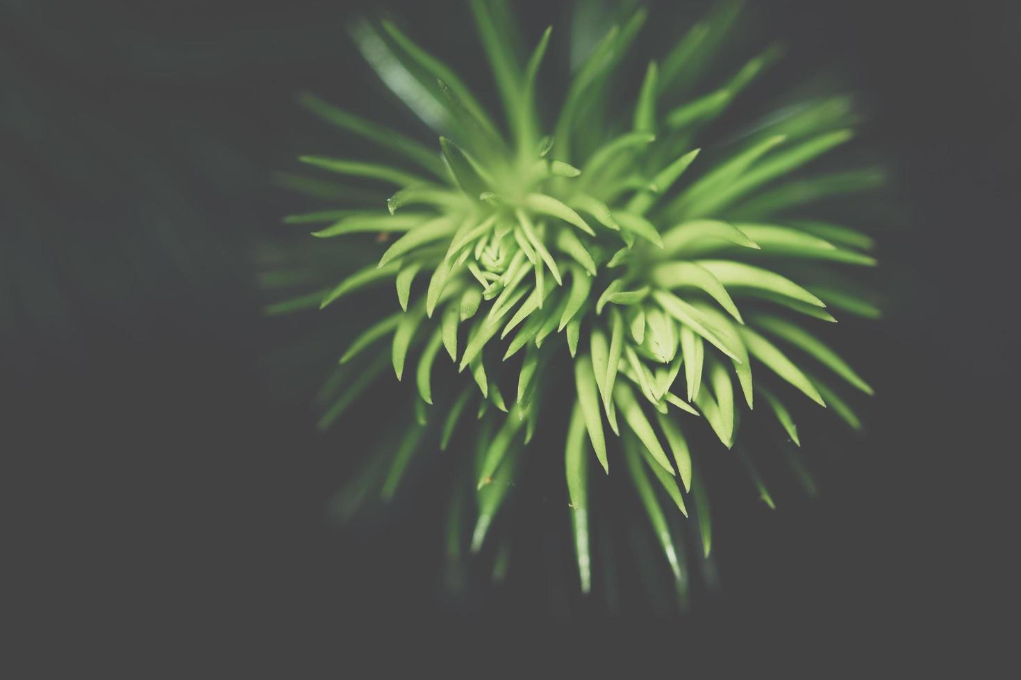 fond de feuille sombre photo