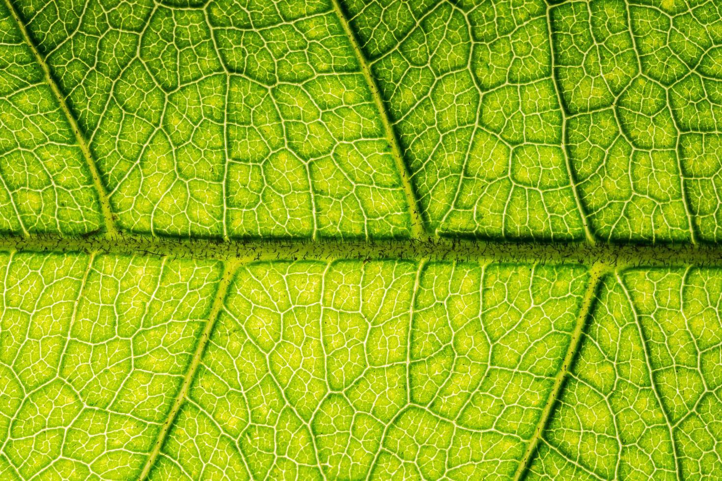 motif de feuilles vertes photo