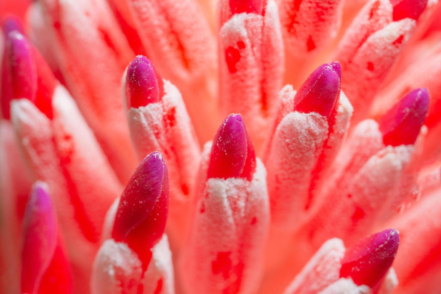 gros plan fleur rouge photo