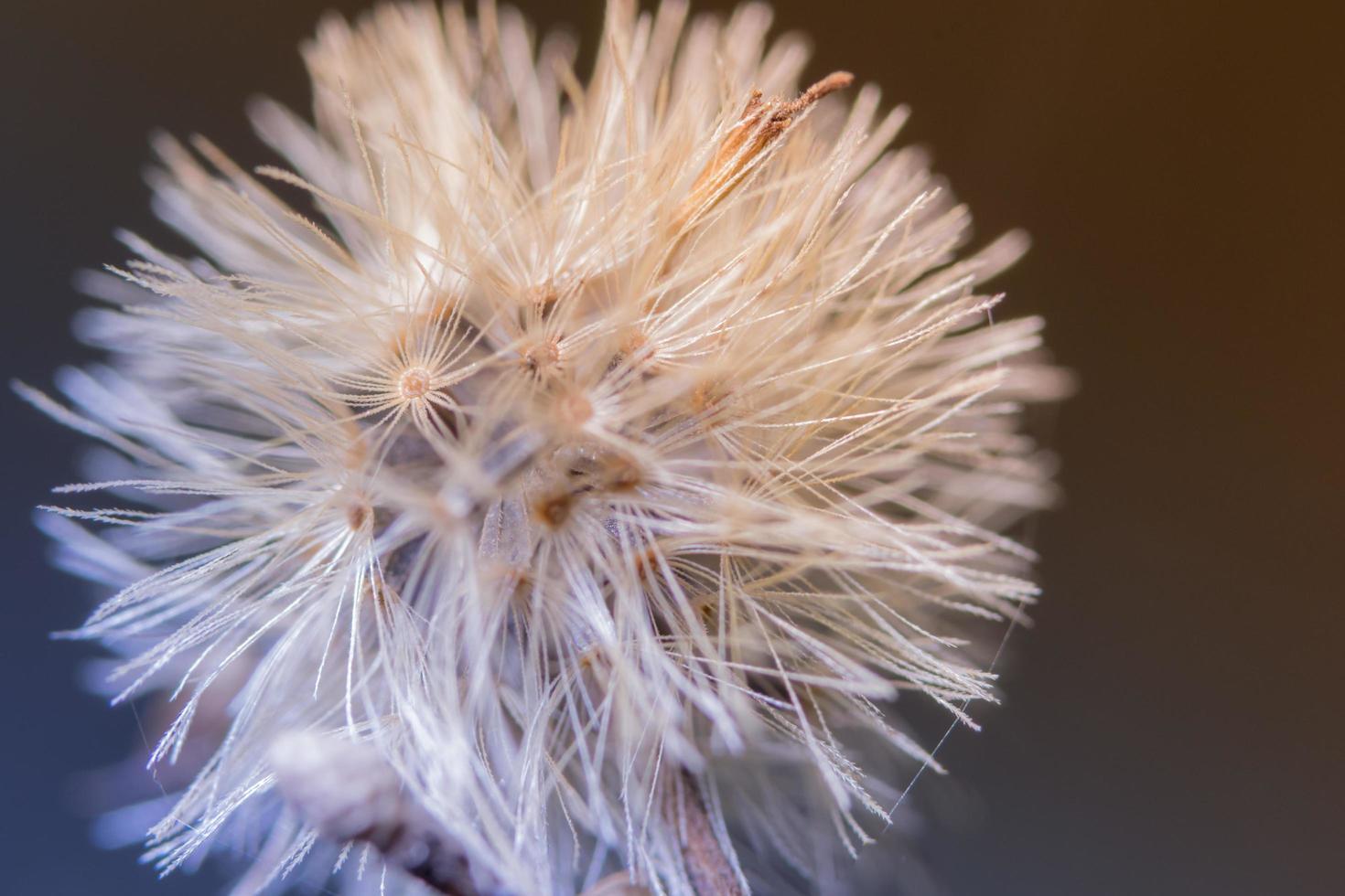 fleurs sauvages sur fond marron photo