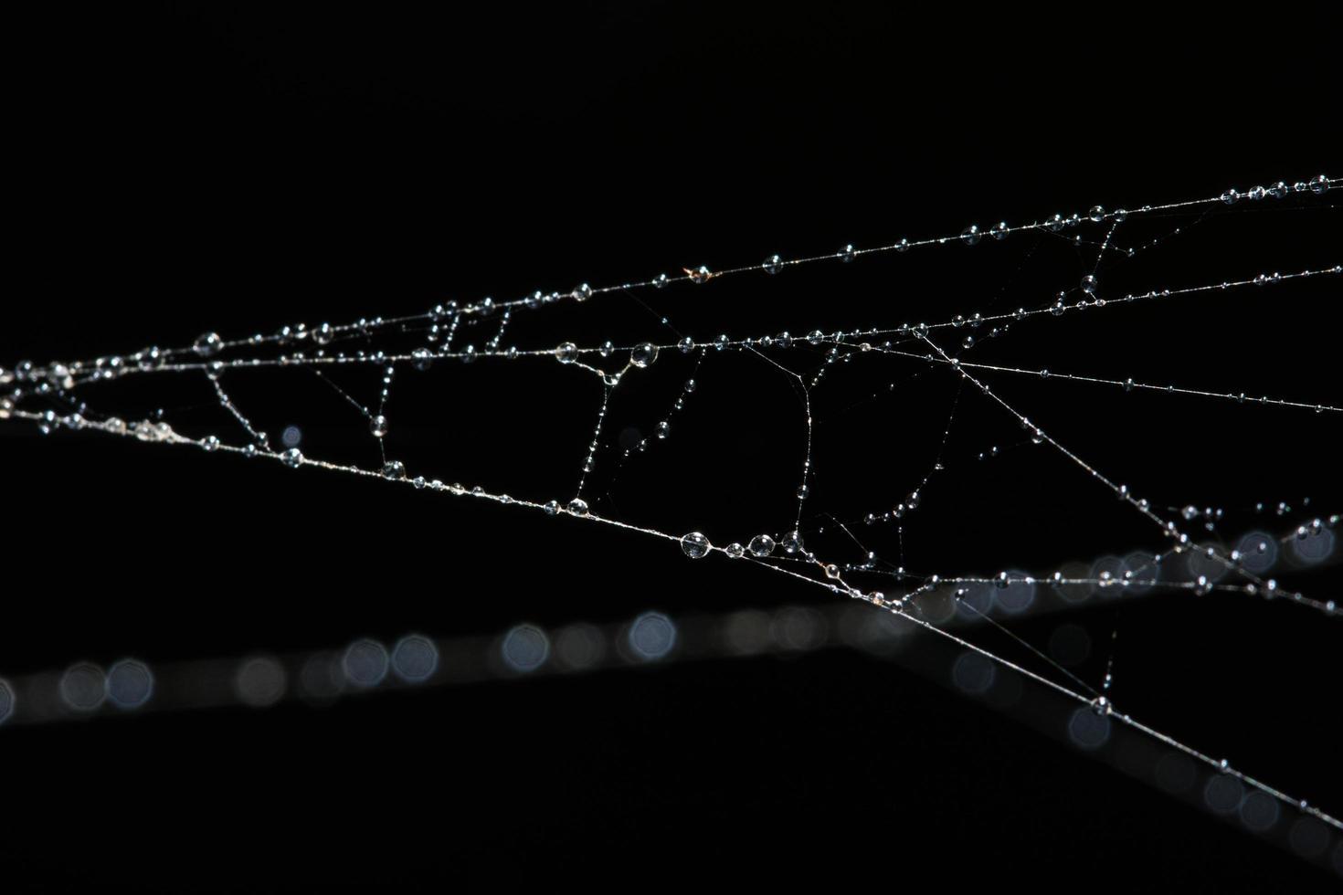 gouttes d'eau sur la toile d'araignée, gros plan photo