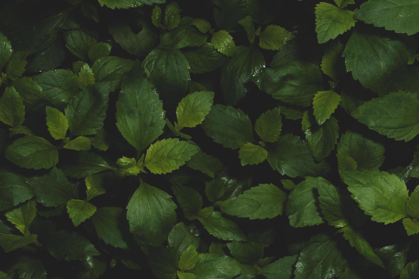 fond de feuilles sombres photo