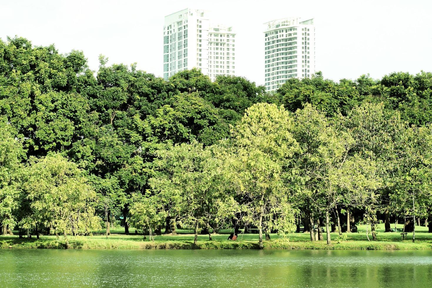 parc de la ville avec des gratte-ciel derrière les arbres photo