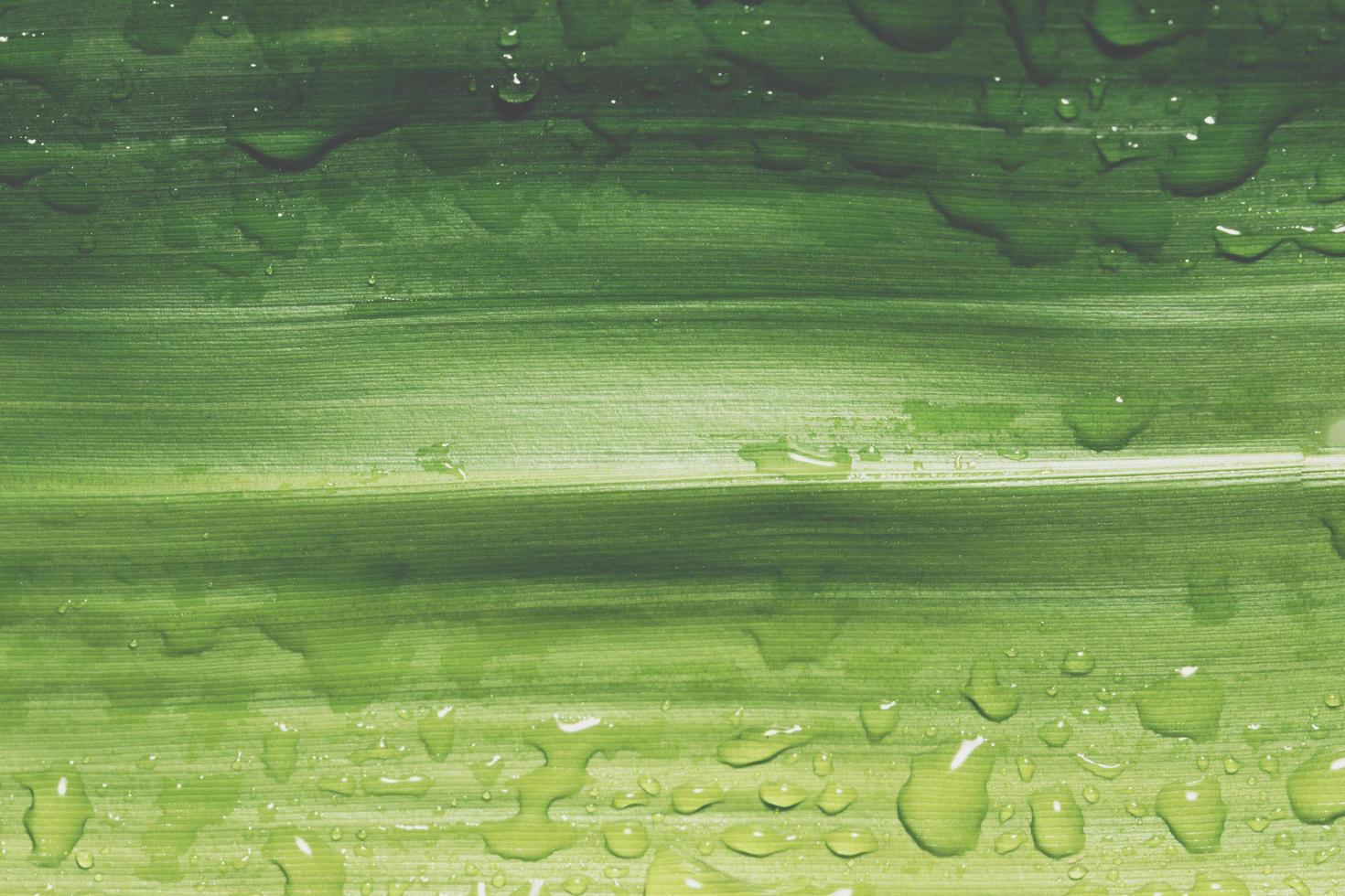gouttes d'eau sur une feuille photo