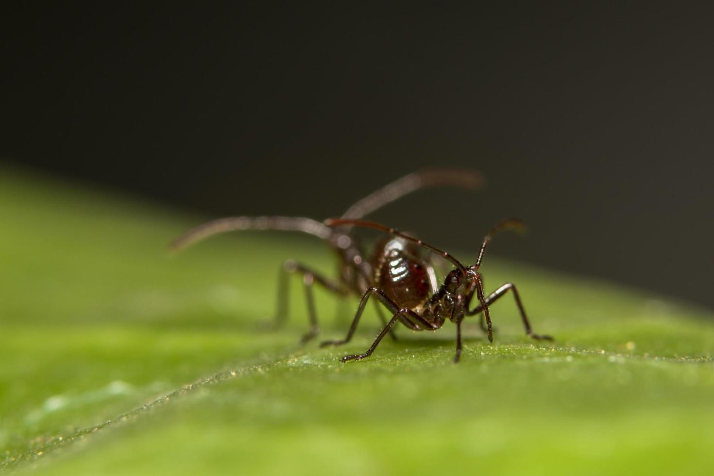 fourmis brunes sur une feuille photo