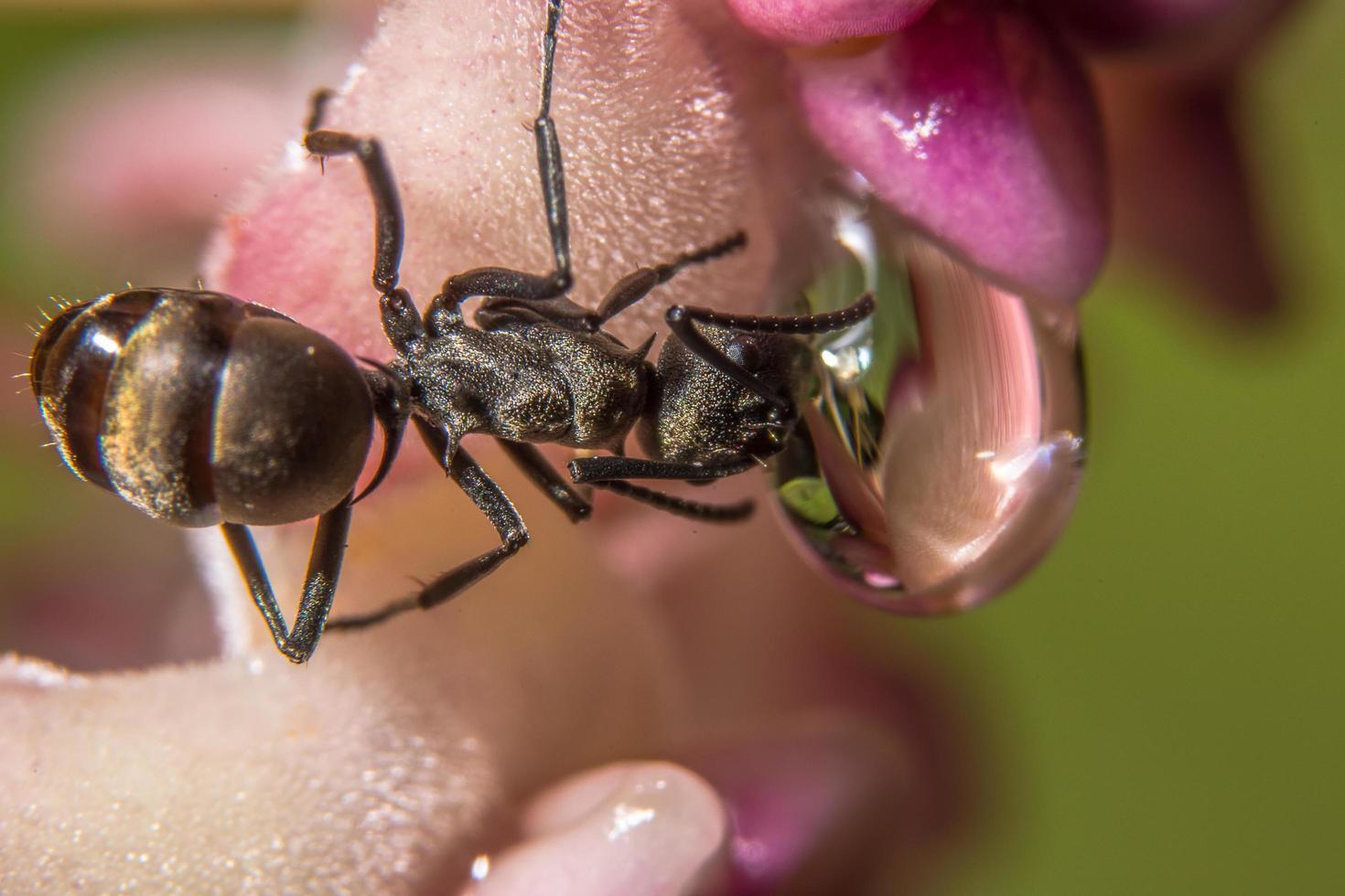 fourmi sur une fleur photo