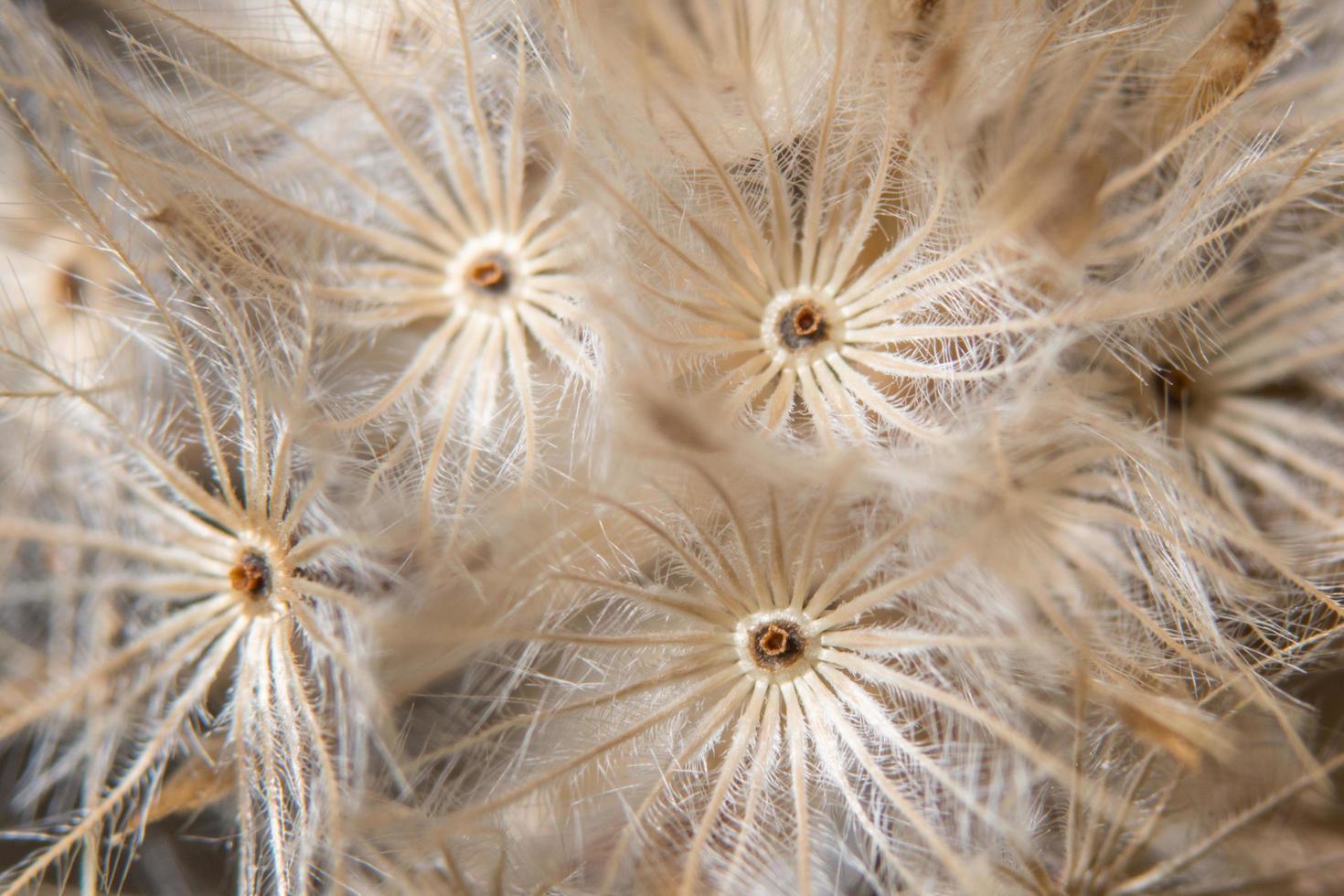 gros plan de fleurs sauvages marron photo