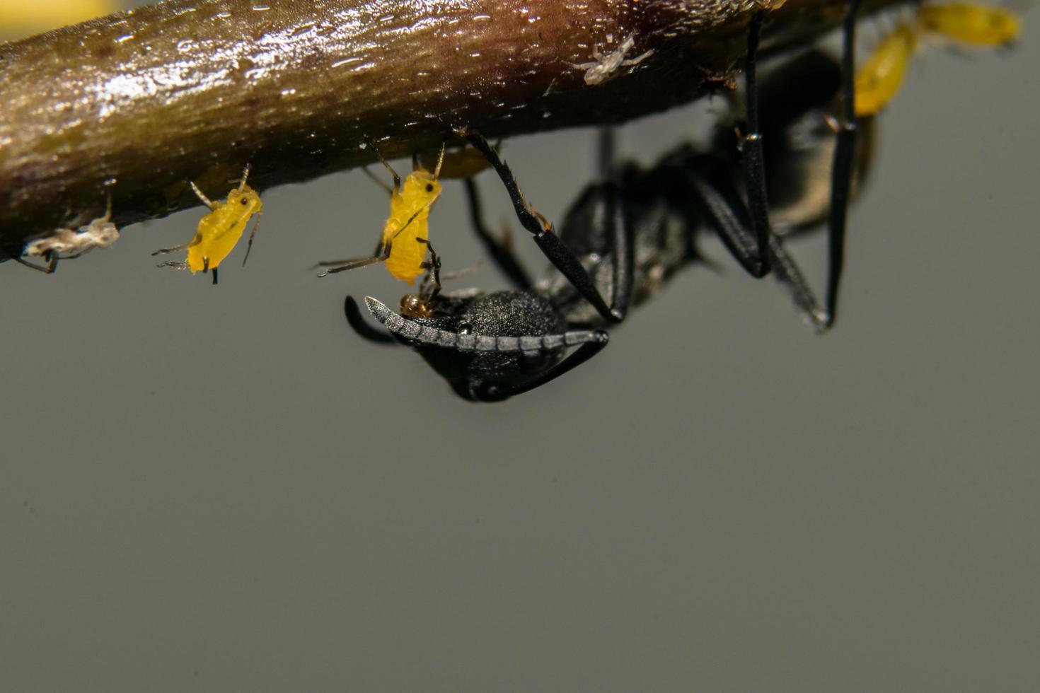 fourmi sur une plante photo