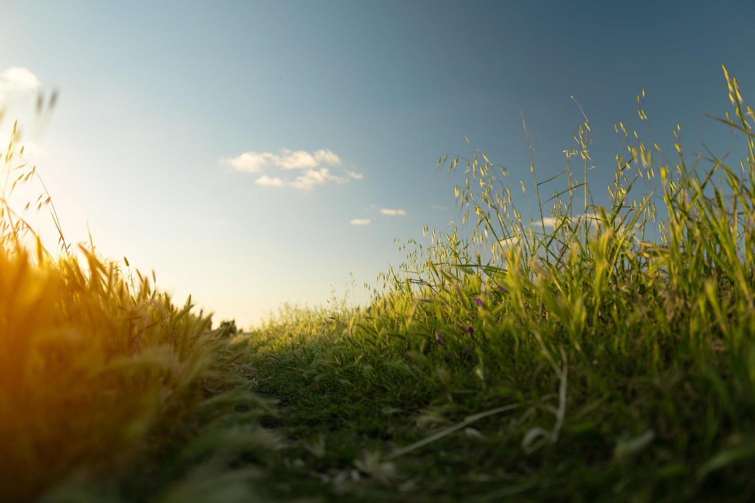 champ vert au lever du soleil photo