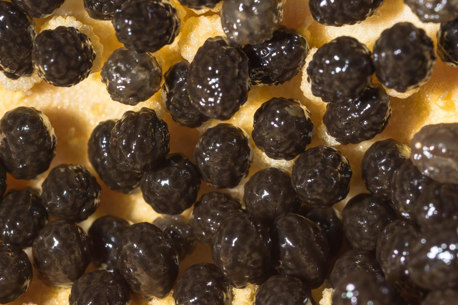 gros plan de graines de papaye photo