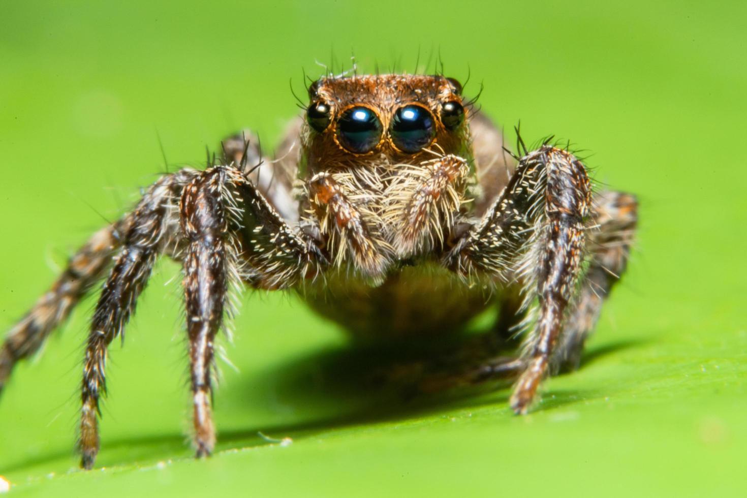 araignée dans la nature photo