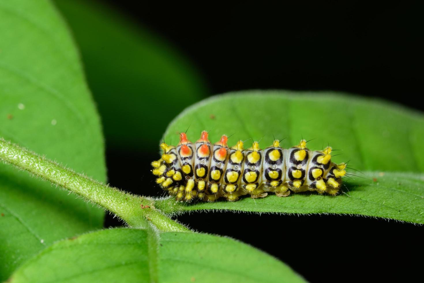 ver sur une plante photo