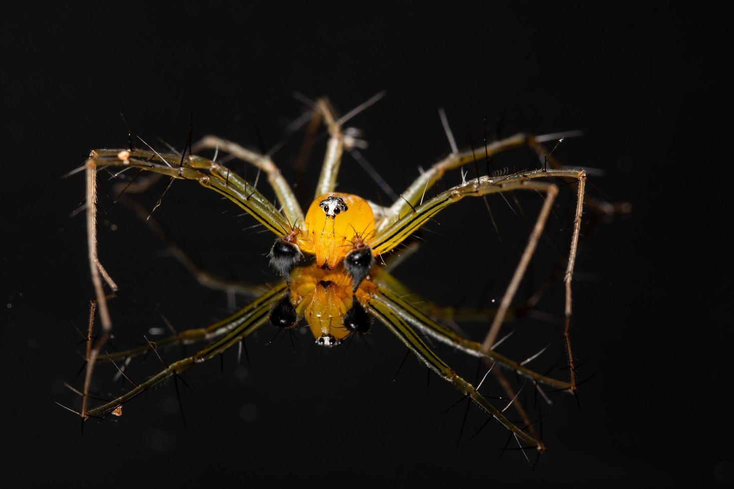 araignée sur un fond réfléchissant photo